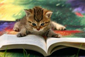 Знания важны