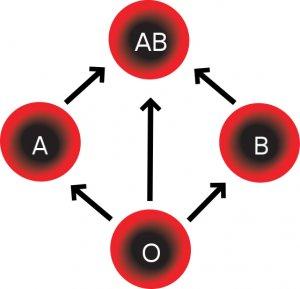 Почему Бог создал четыре группы крови?